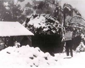 gardens_snow_on_fernery_1900s